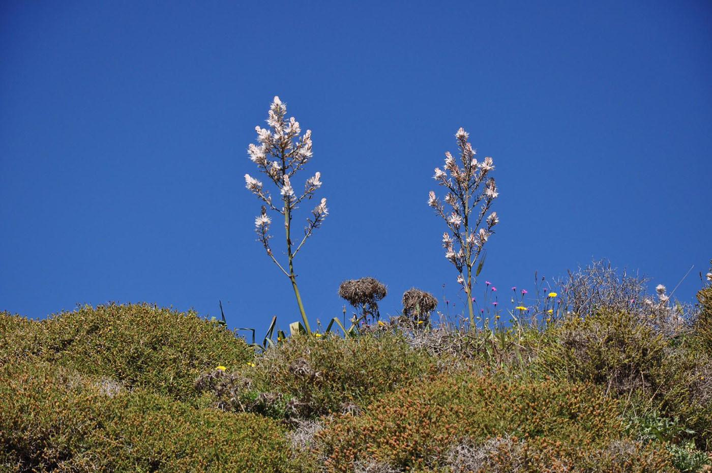 Kräuter, Tees, Gemüse – Kretas Flora für Kenner und Genießer